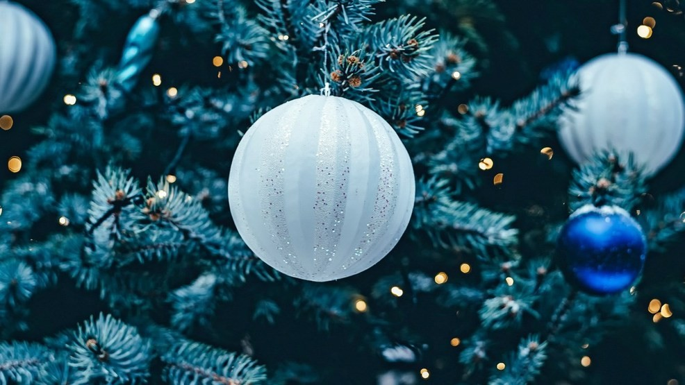 Christmas.2019 State Christmas Tree To Be Harvested Delivered To